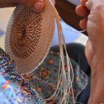Rescatando, el cogollo, fibra natural utilizada por Los Eco Artesanos de Azuero