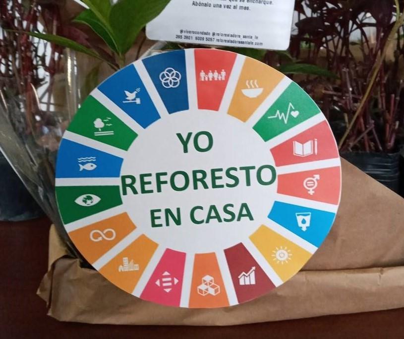 """""""Yo reforesto en casa"""" ODS 13 Acción por el Clima"""
